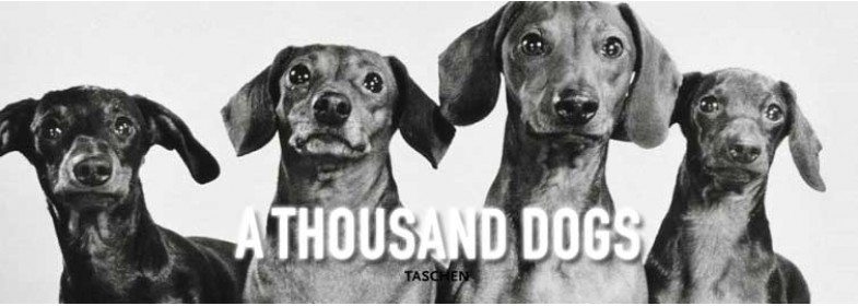 A THOUSAND DOGS
