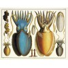 ALBERTUS SEBA'S CABINET OF NATURAL CURIOSITIES