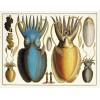 ALBERTUS SEBA'S CABINET OF NATURAL CURIOSITIES