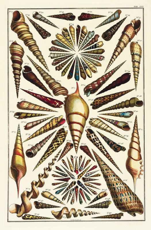 Albertus Seba S Cabinet Of Natural Curiosities
