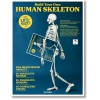 BUILD YOUR OWN HUMAN SKELETON – LIFE SIZE!